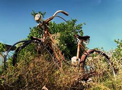 Le vieux cycle