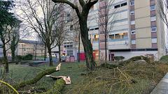 Belfort: 2018.01.03 Dégat de la tempète Eléanore 04