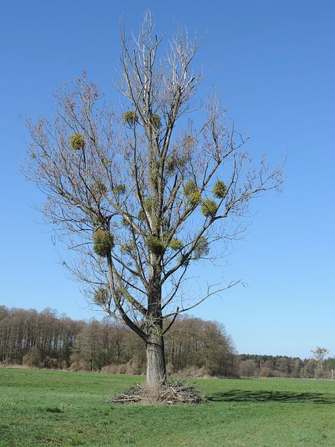 Baum mit Untermietern