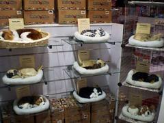 Pet shop.