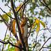 Squirrel steals a nut