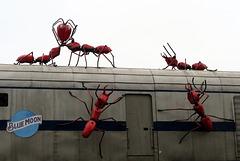 IMG 6712-001-Ants!!!