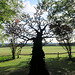 IMG 7007-001-Exotic Tree 1