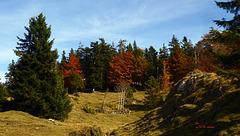 Herbst auf der Alm (PiP)