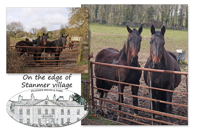 Horses on the edge of Stanmer Village - 1.4.2016