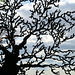 IMG 7009-001-Exotic Tree 2