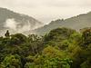 Evening mist in the rainforest
