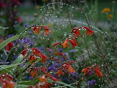 Sparkling  Garden