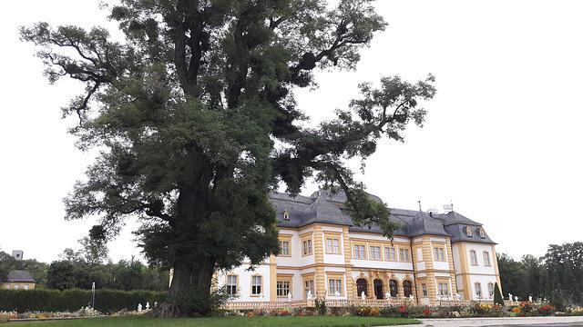 Rococo Garden