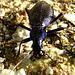 2 (25)...austria käfer bug