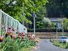 Path with irises
