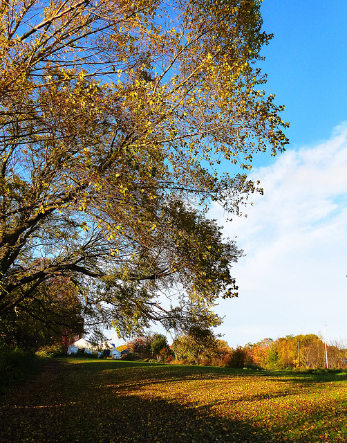 Leaves and slanting light