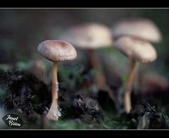 182/366: Cool Little Mushrooms