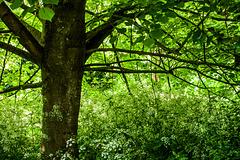 O Tree in May