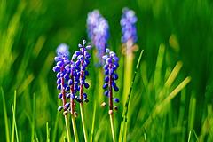 Frühlingsstimmung - Spring mood