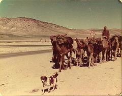 Qashqai nomads, Iran, 1977