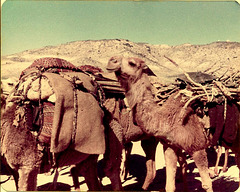 Caravan, Iran, 1977