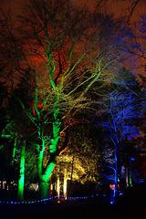 Illumination im Botanischen Garten