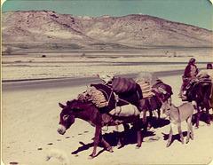 Donkeys, Iran, 1977