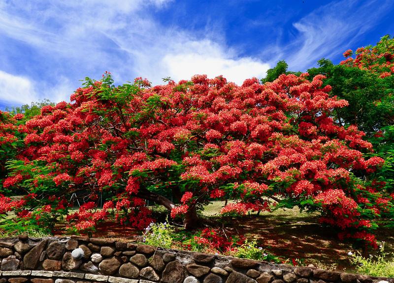 Un peu de couleurs des îles françaises pour vous réchauffer