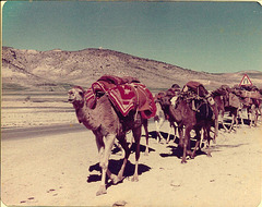 Fars caravan, Iran, 1977