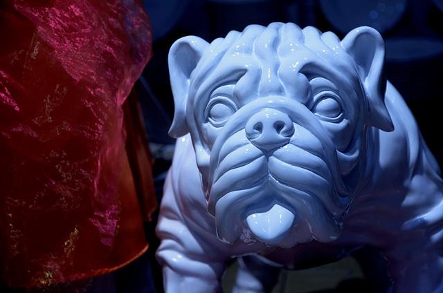 Et alors, vous n'avez jamais vu de chien bleu ?