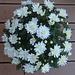 Sommerblumen (2)