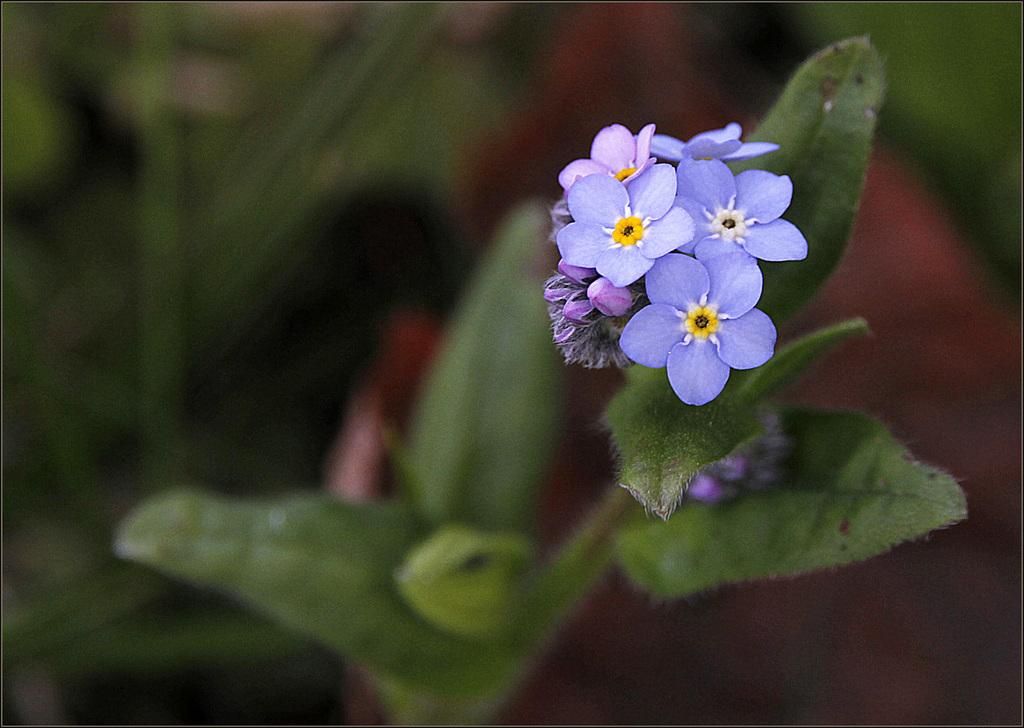 Une fleur par jour.... - Page 5 41561254.f6d41bd4.1024