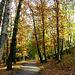 Walking path in Autumn