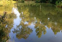 Le petit étang et ses reflets