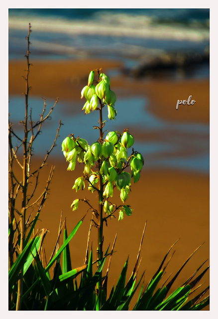 Flora arriba del acantilado