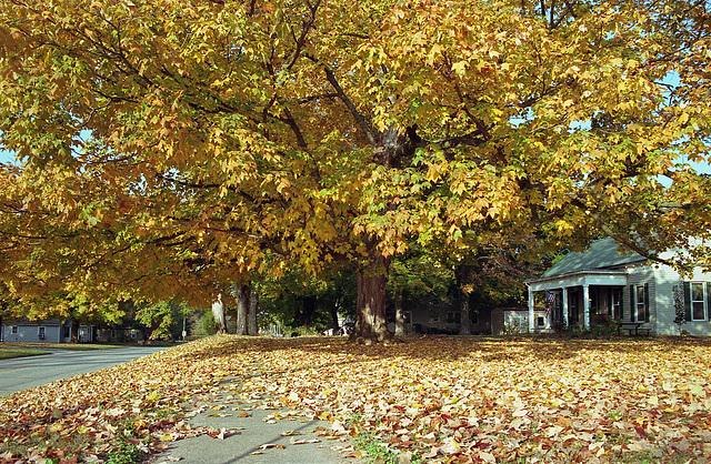Fall Tree 2014