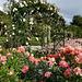 El Retiro Rose Garden