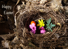 Happy Easter, Ipernity!