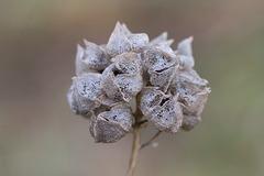 MM: Seedheads