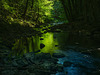 Smaragdwald