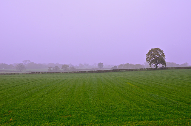 Misty start to the day