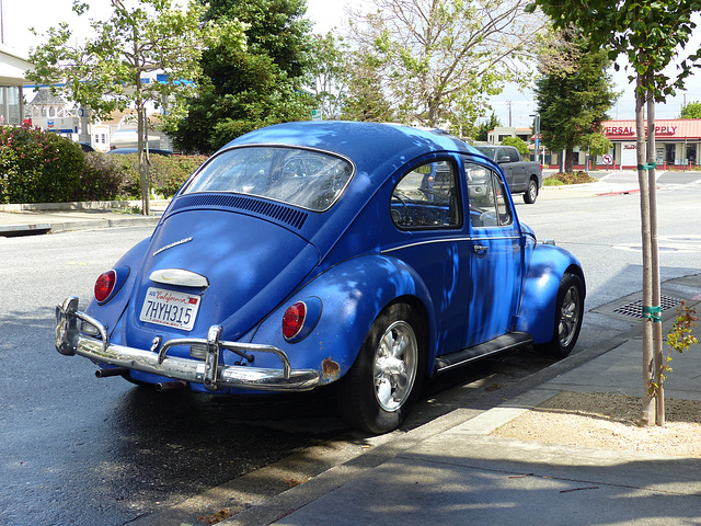 Blue Beetle in Millbrae (1) - 22 April 2016