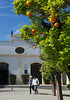 Orange trees at Jerez