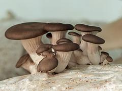 Meghan & Kwesi's mushrooms!