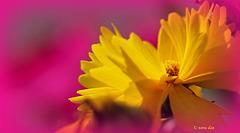 Fleurs en jaune ....