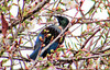 Tui In Branches