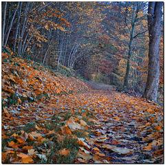 Herbst-Weg