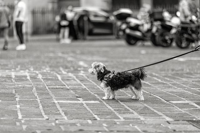 Petit chien dans un grand monde