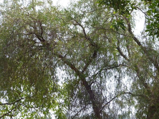Trama de hojas