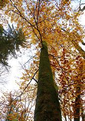Dessous d'automne.... futaie
