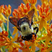6035056 DxOdL · Bees