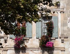 finestre fiorite