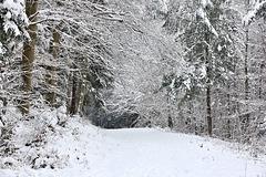 Sonntagsspaziergang im Winterwald