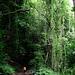 Hinein in den dunklen Wald